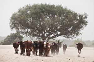 La UE y la FAO redoblan sus esfuerzos contra la desertificación en África, el Caribe y el Pacifico