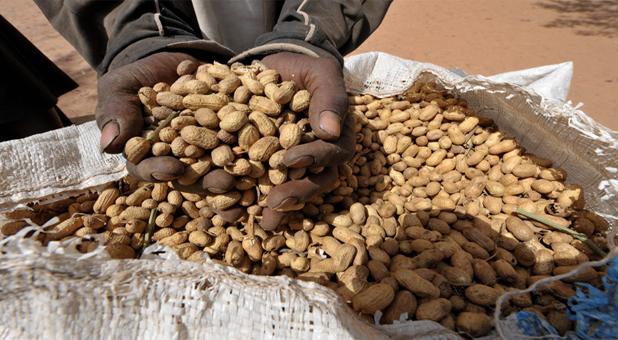 ¿Te has preguntado alguna vez cómo se mide el hambre en el mundo?