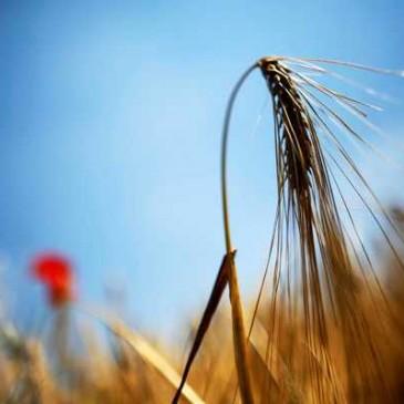 Científicos aseguran que el cambio climático amenazará la producción de alimentos