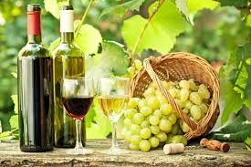 Descubrimiento de científica chilena ahorraría millones a la industria del vino